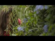 Julia Roca -  Among the Bushes (2015)